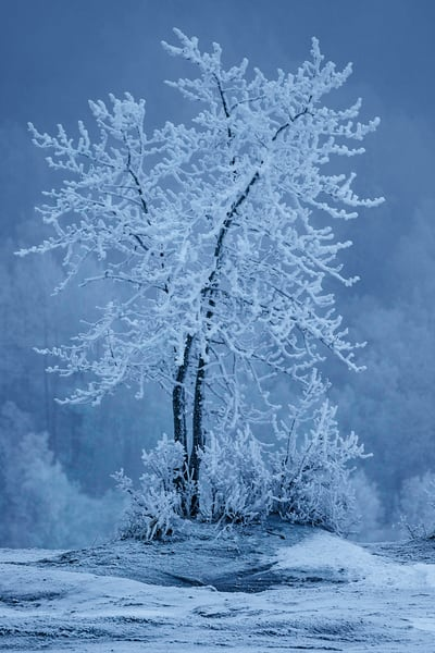 Winter landscape of hoar frost covered trees along Knik River in the fog    in the Matanuska Valley near Palmer, Alaska.  Southcentral Alaska  Photo by Jeff Schultz/SchultzPhoto.com  (C) 2019  ALL RIGHTS RESERVED