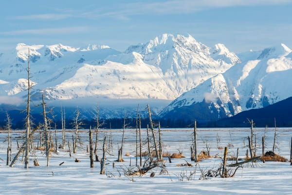 Winter landscape of dead trees frozen into water with Chugach Mountains in background. 20-mile river valley. Southcentral, Alaska   Photo by Jeff Schultz/SchultzPhoto.com  (C) 2018  ALL RIGHTS RESERVED