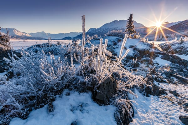 Winter landscape of hoarfrost on grasses and spruce tree along the Knik River on a sunny day in the Matanuska Valley near Palmer, Alaska. The sun peaking over the Chugach Mountains in Southcentral Alaska  Photo by Jeff Schultz/SchultzPhoto.com  (C