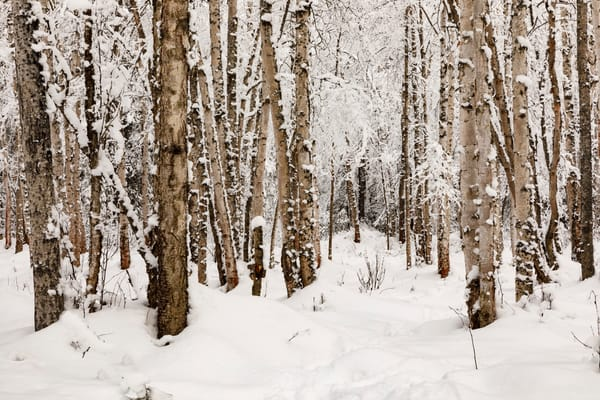 Winter Landscape of snow-covered trees and Campbell Creek greenbelt in Anchorage, Alaska  Alaska  Photo by Jeff Schultz/  (C) 2020  ALL RIGHTS RESERVED