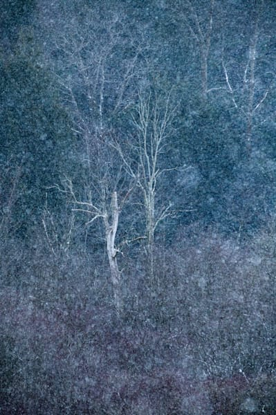 Snowing on a Pennsylvania forest