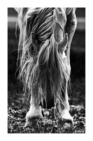 """Graceful Surrender"" Limited Edition Photography Art | Koru Photo Designs"