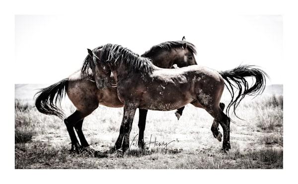 """Being Wild"" Limited Edition Photography Art | Koru Photo Designs"