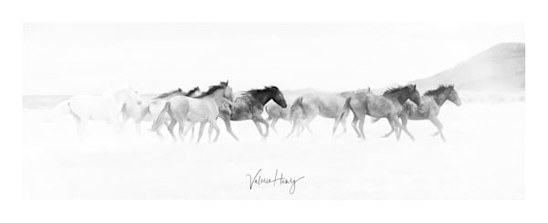 """""""Dancing With The Wind"""" Limited Edition Photography Art 