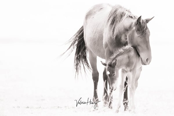 """Softness Of Love"" Limited Edition Photography Art | Koru Photo Designs"
