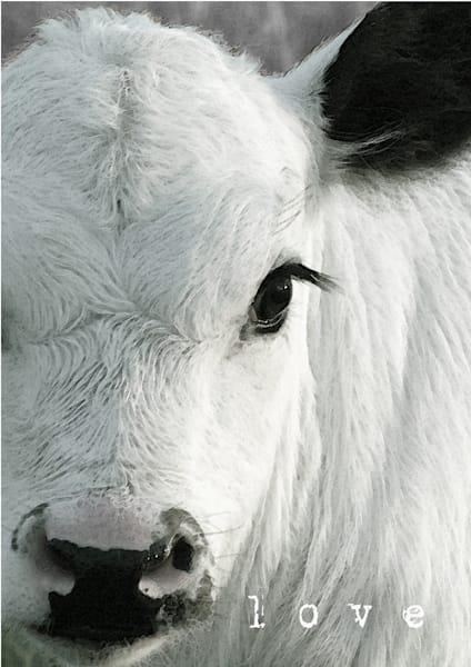 Black & White Calf Art