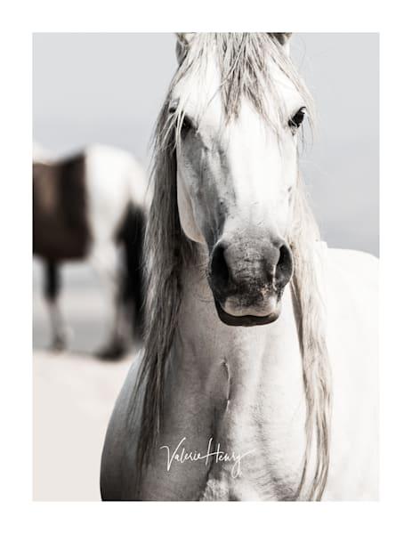 """Illusion"" Limited Edition Photography Art | Koru Photo Designs"