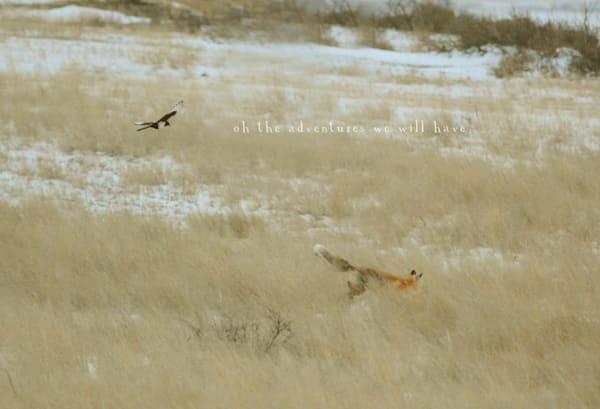The Fox & The Magpie  Art | RHONDA ADDISON Fine Art Photography