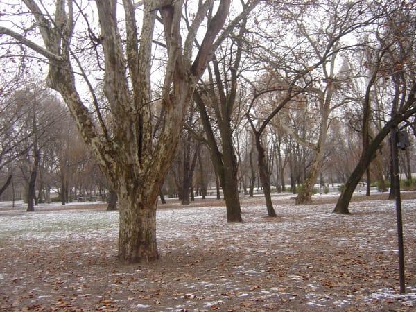 Wintery Branches Art | Angela Valente Romeo