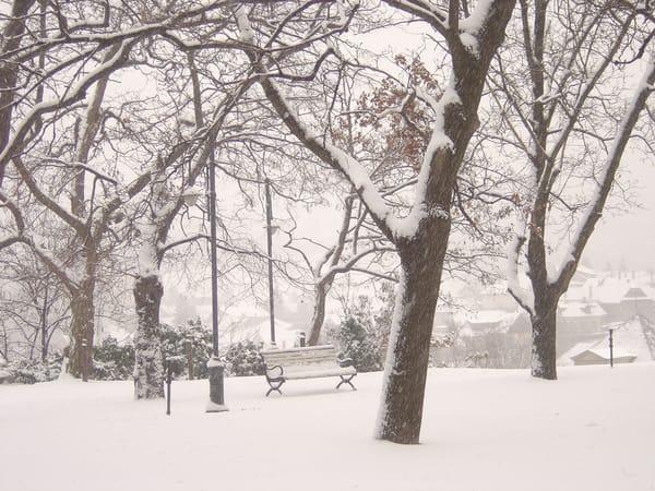 Winter Trees Art | Angela Valente Romeo