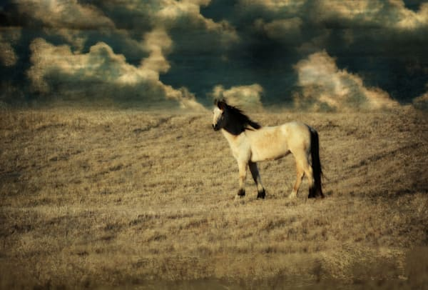 BUCKSKIN HORSE IN FIELD ART