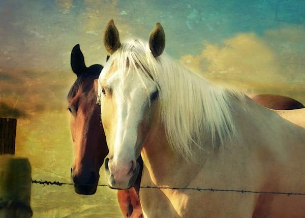 Morning Light Horses