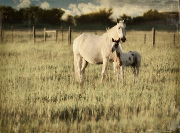 Mother and Son Horses Art