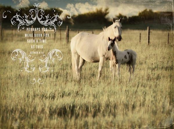 HORSE & COLT Inspirational Art