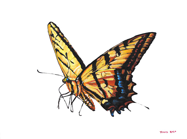butterfly, swallowtail, pollinator, bug, insect