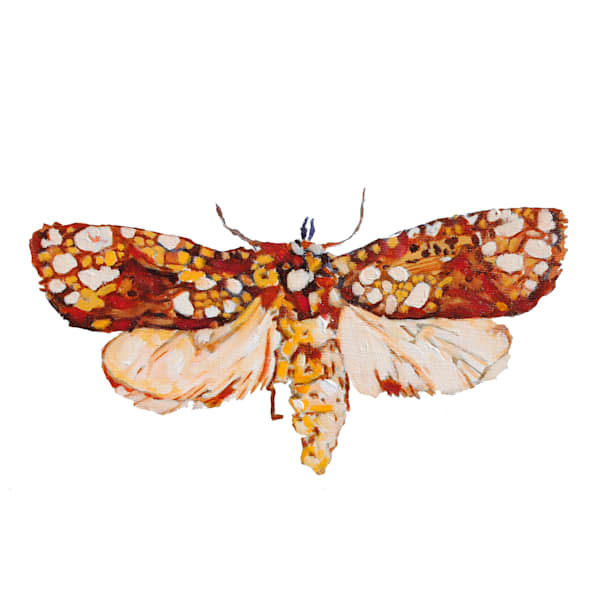 moth, print, insect, bug, art, painting