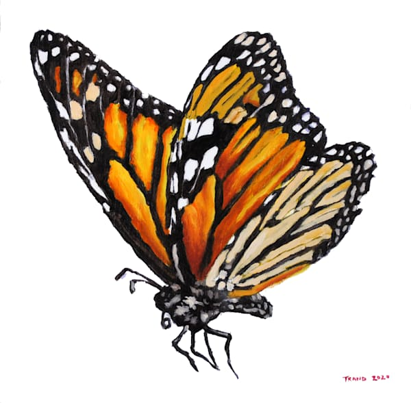 monarch, butterfly, pollinator, sweet, insect, art, painting