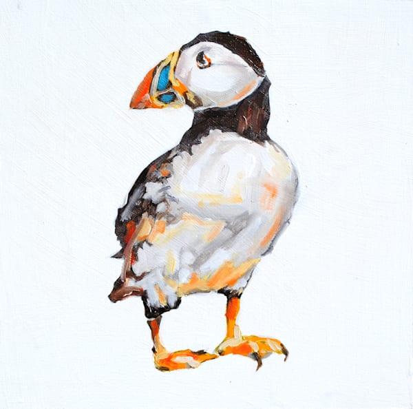 puffin, arctic, bird, sea life, sea
