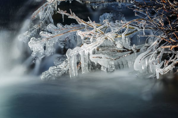 Fall landscape of Campbell Creek flowing with ice covered willow branches.  Chugach State Park in Anchorage, Alaska  Photo by Jeff Schultz/SchultzPhoto.com  (C) 2016  ALL RIGHTS RESVERVED