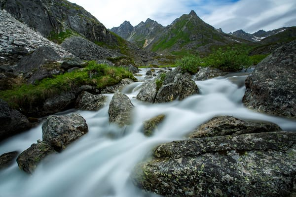 Flowers and Archangel Creek in Talkeetna Mountains in Hatcher Pass East Management Area, Matanuska Valley, Southcentral, Alaska  Summer 2016  Photo by Jeff Schultz (C) 2016