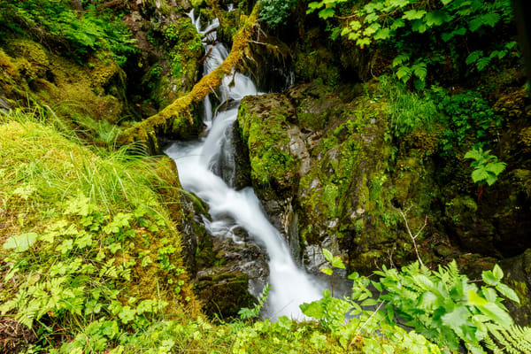 Summer landscape of virgin creek and falls in Chugach Natioinal Forest  Southcentral, Alaska  Girdwood  Photo by Jeff Schultz/  (C) 2020  ALL RIGHTS RESERVED