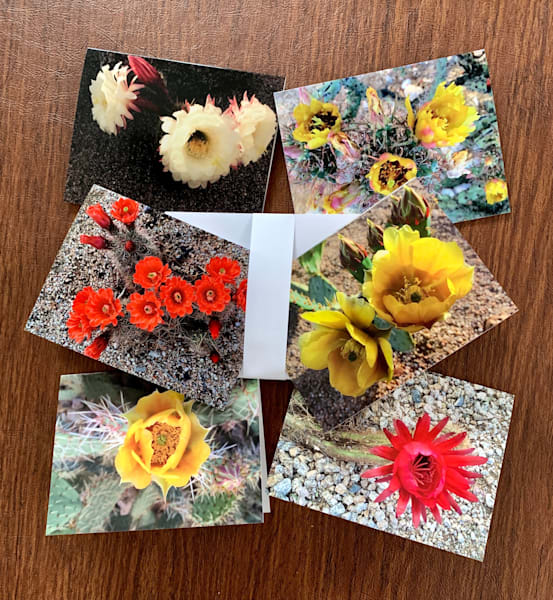 Cactus Blooms Notecards by Emily Gilman Beezley