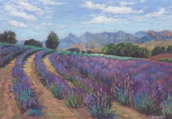 Lavender near Boonah