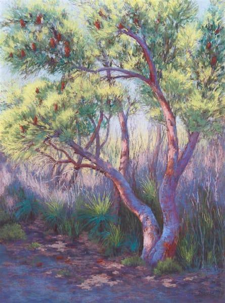 Banksia Aglow