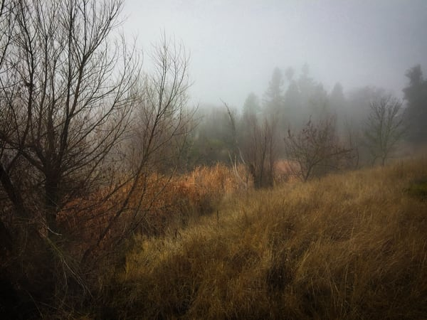 Northstar Park Textures Art | Patrick Cosgrove Art and Photography