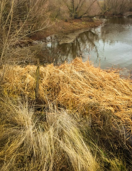 Grassy Pond Art | Patrick Cosgrove Art and Photography