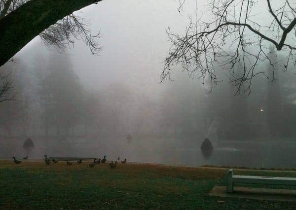 Ducks And Fog Art | Patrick Cosgrove Art and Photography