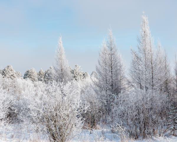 Winter Field Blue   Art   studio176