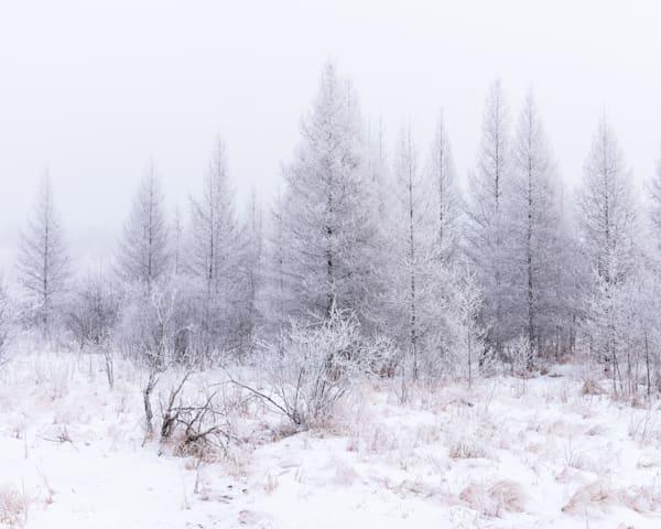 Winter Field White   Art   studio176