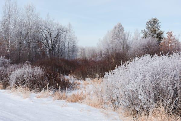Dogwood Trail Art   studio176