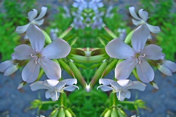 Mirror 101_Bittersweet In Lavender