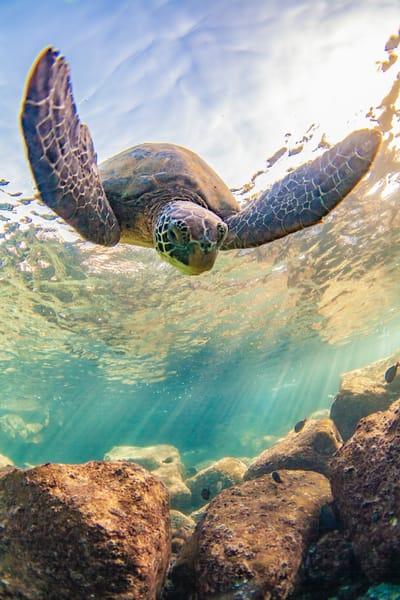 Maui Air | Sm114 Art | Pictures Plus
