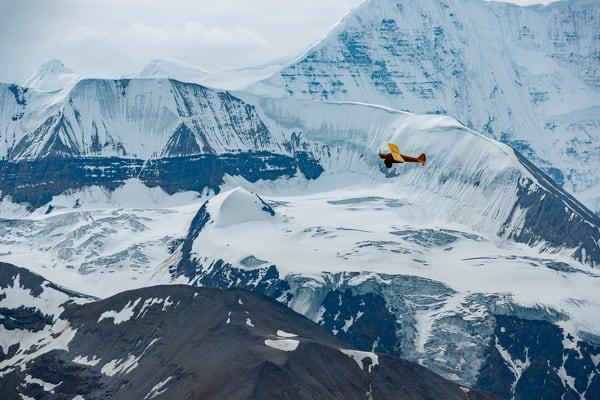 Cub in Wrangells