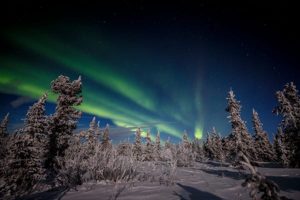 Frost Tree Lights