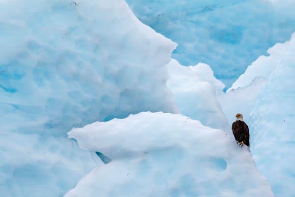 Eagle Ice