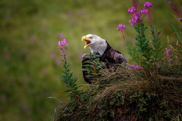 Bald Eagles & Birds