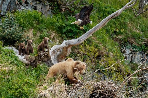 Bear and Eagle Nest 2