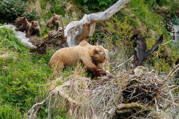 Bear and Eagle Nest 1