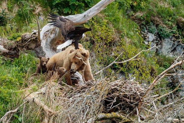 Bear and Eagle Nest 5