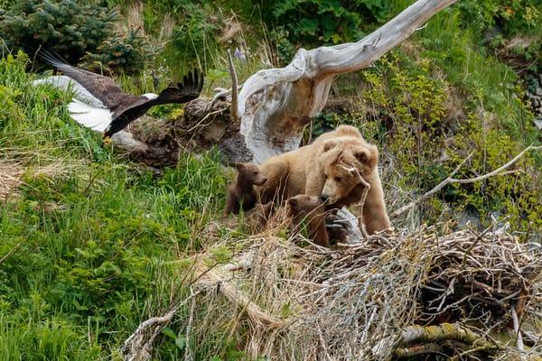 Bear and Eagle Nest 4
