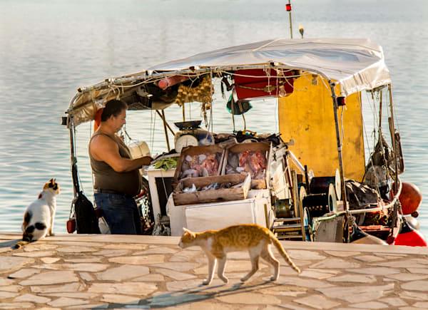 Cats Down At The Port, Skopelos Photography Art   Ben Asen Photography