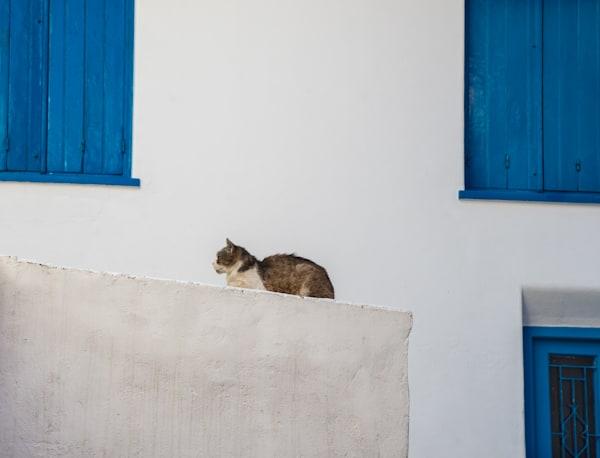 The Regal Cat, Skopelos Photography Art   Ben Asen Photography