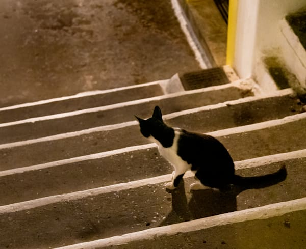 Cat Looking Down Steps, Skopelos Photography Art | Ben Asen Photography