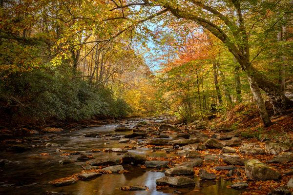 Fall Dunlop Creek West Virginia 1547 Fss Art | Koral Martin Fine Art Photography