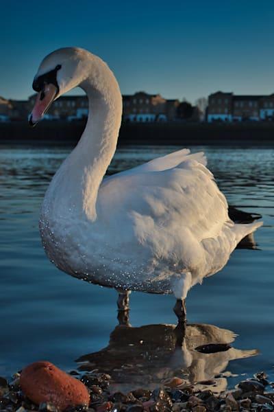The Perfect Bird Art   Martin Geddes Photography