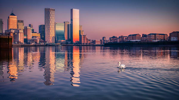 Swanning To Docklands Art   Martin Geddes Photography